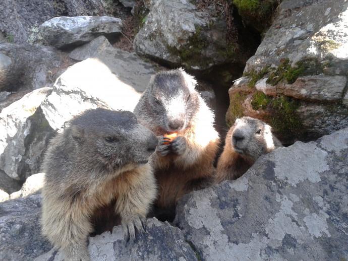 Marmotte di Chiareggio
