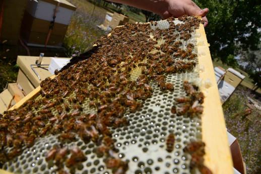 Formaggio e miele - A scuola di montagna