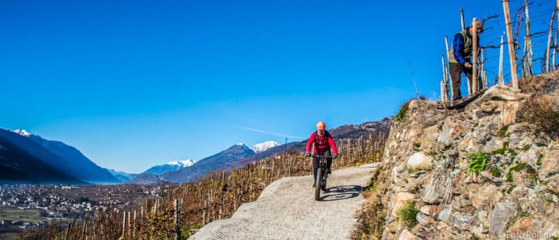 The Vineyard Route - cycle path