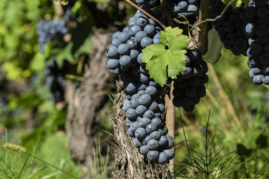 La strada del vino e del sapore