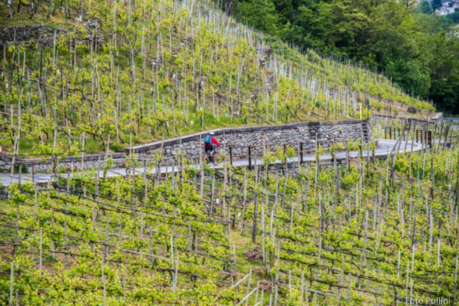The Grumello vineyards in Montagna in Valtellina