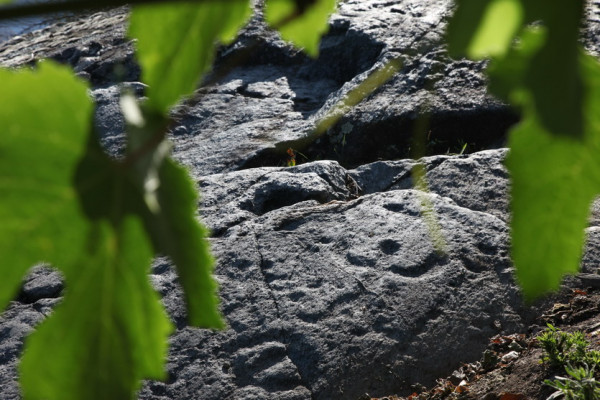 Incisioni rupestri sul percorso