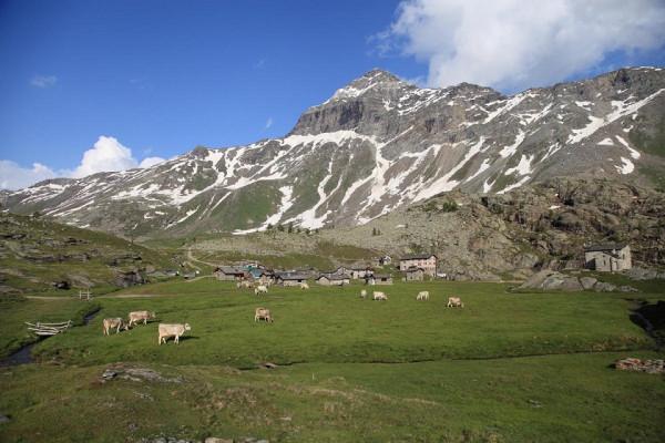 Alpe Prabello - riproduzione riservata